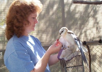 Black Shouldered Kite with Michelle by Ross