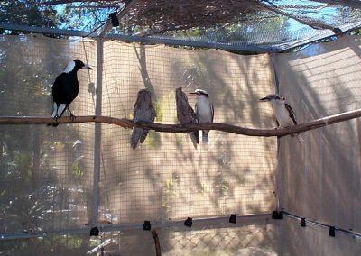 birds in rehab by Ross