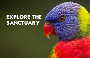 Links to Currumbin Wildlife Sanctuary