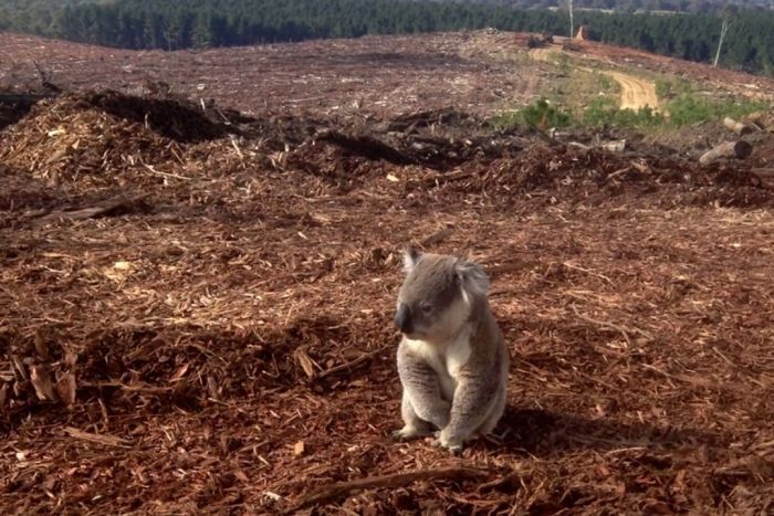 Think Australia's bushfires killed a lot of animals?